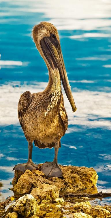 Pelican Key Largo, Florida  bywildobscuraphoto