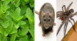 Si vous avez cette plante chez vous, vous ne verrez plus jamais de rats, d'araignées ou d'insectes !