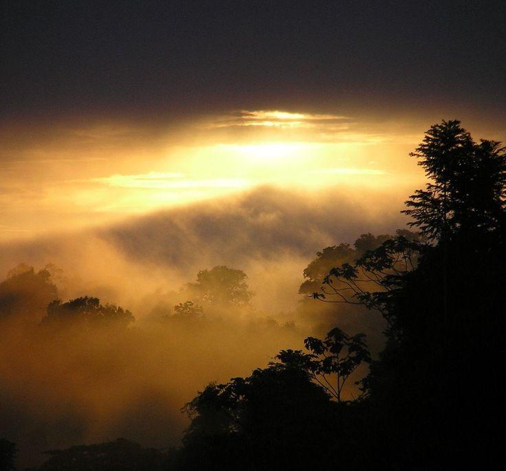 Sunrise over the Jungle   Suriname