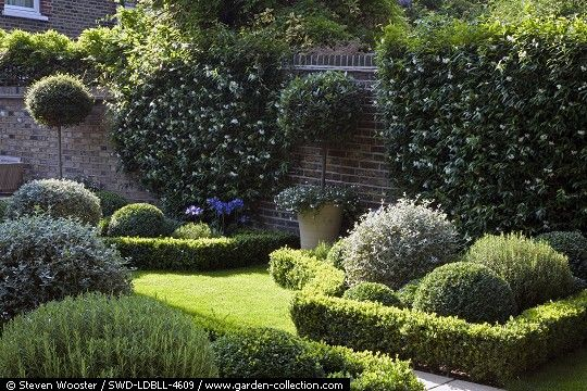 Formal garden with clipped Buxus Sempiverens, Rosmarinus officinalis, Lavandula Angustifolia and Teucrium fruiticans. Trachelospermum jasminoides in flowering on the wall - Lotte Lorimer Garden
