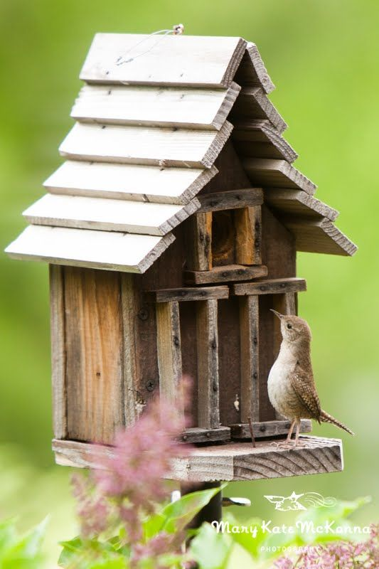 A little Wren Inspecting the birdhouse for a new living space. Like the rustic aspect of this, the lines of the house.... not so much.
