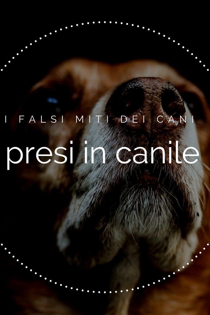 Quanto c'è di vero sui cani presi in canile?