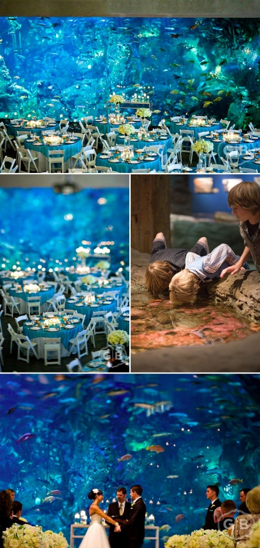 Love this in front of the huge aquarium. <3Shower Ideas, Wedding Shower, Seattle Aquariums, Sea Wedding, Aquariums Wedding, Cool Ideas, Aquarium Wedding, Wedding Locations, The Sea