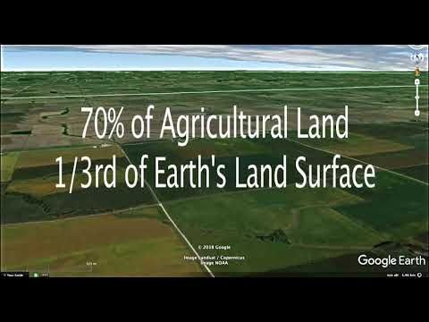 Crop Land Taken From Forests - CO2 Up