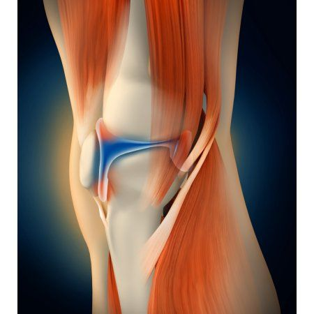 17 best ideas about human knee on pinterest | anatomy of the knee, Muscles