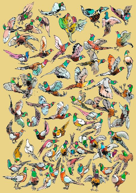 66 pheasants, of which one is white.
