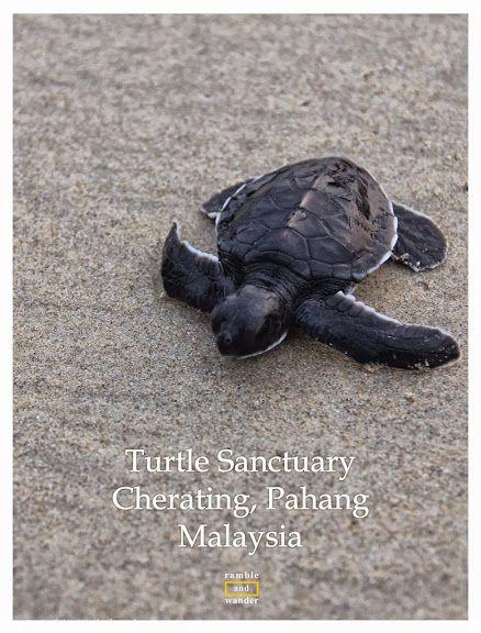 Turtle Sanctuary in Cherating, Pahang, Malaysia | www.rambleandwander.com