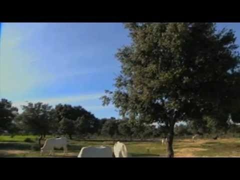 Minutos Verdes Los nuevos custodios del medio ambiente http://www.efeverde.com/blog/noticias/los-nuevos-custodios-del-medio-ambiente/