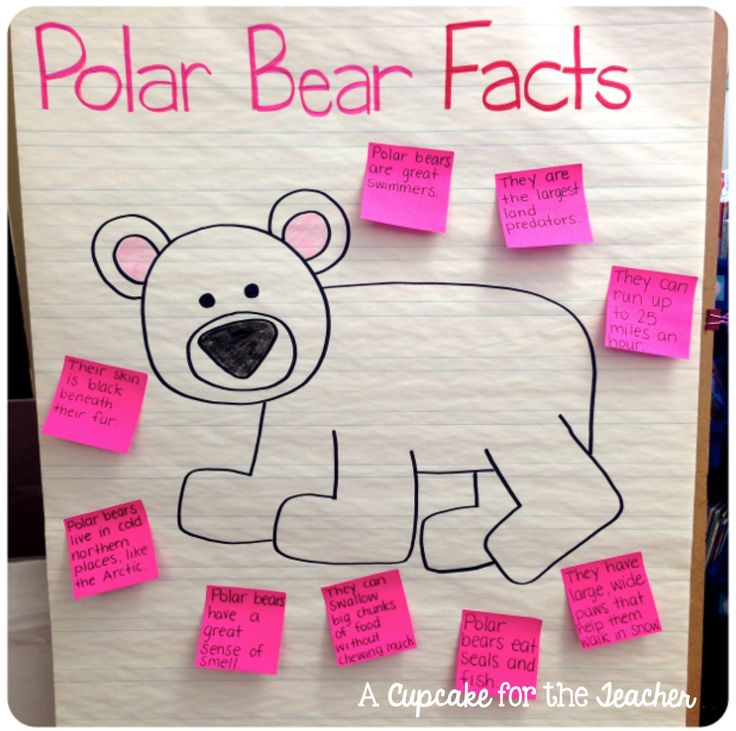 Polar Bear (Any Animal) Facts (Students draw and dictate what teacher will write on sticky note)
