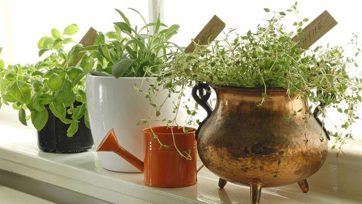 Benefits of indoor plants   OverSixty