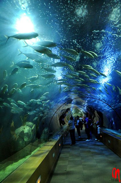 L'Oceanogràfic, de la Ciudad de las Artes y las Ciencias es el mayor acuario de Europa. L'Oceanografic is the biggest aquarium in Europe. Valencia, España.