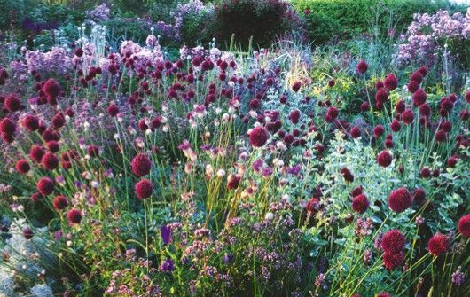 56 best images about pure inspiration on pinterest for Grasses planting scheme