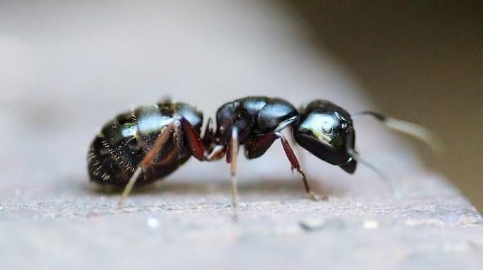 Les fourmis ont envahi ma maison tout récemment : quelle galère ! Heureusement, j'ai appris grâce à mes amis qu'il existe des alternatives naturelles aux pesticides. Ils m'ont donn