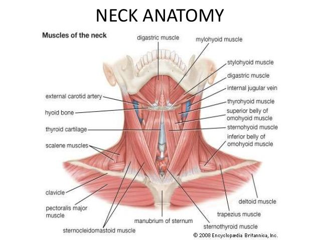 Pin By Studentrn2010 On Anatomy