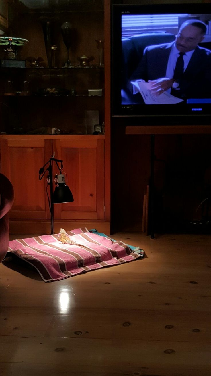 Wizard.... NCIS and comfy pad with heat lamp.... What could be better?