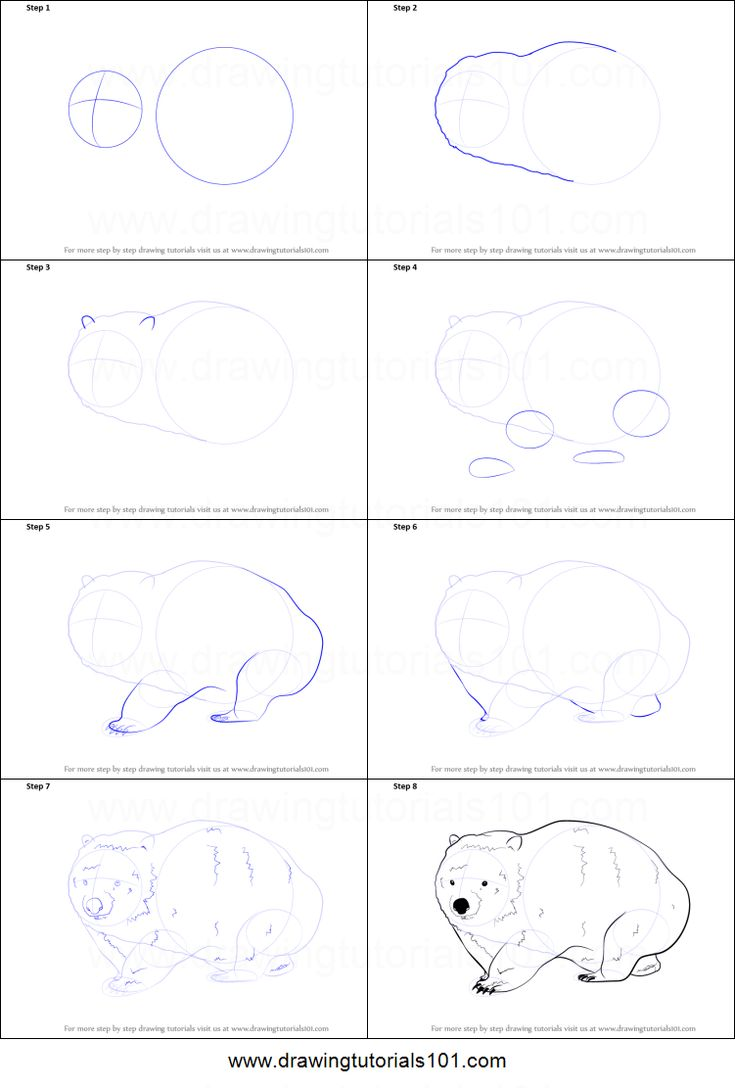 How To Draw A Wombat Printable Step By Step Drawing Sheet :  Drawingtutorials101