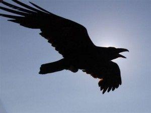 Raven Spirit Meaning