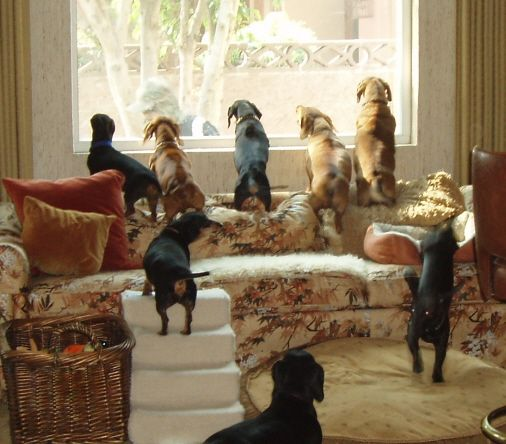 """""""Wiener Wonderland""""   Seriously, that is the name of this Dachshund-Only boarding facility in California~Boards Faciles, Wiener Wonderland, Weenie Dogs, Dachshundon Boards, Doxie, Dreams House, Sweets Animal, Future House, Cat Lady"""