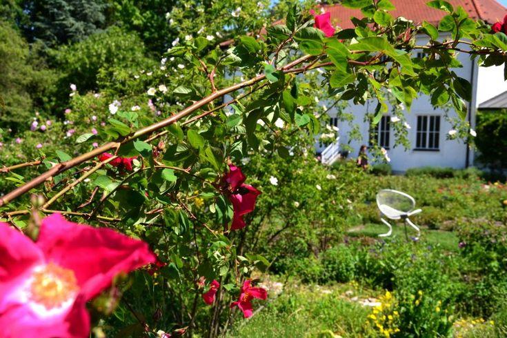 Münchner Stadtviertel: Auch im Rosengarten, der etwas versteckt zwischen Isar und Schyrenbad liegt, ist immer ein idyllisches Plätzchen frei.