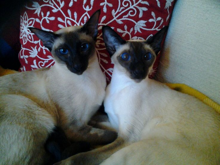 18.12.16 Molly och Kalle