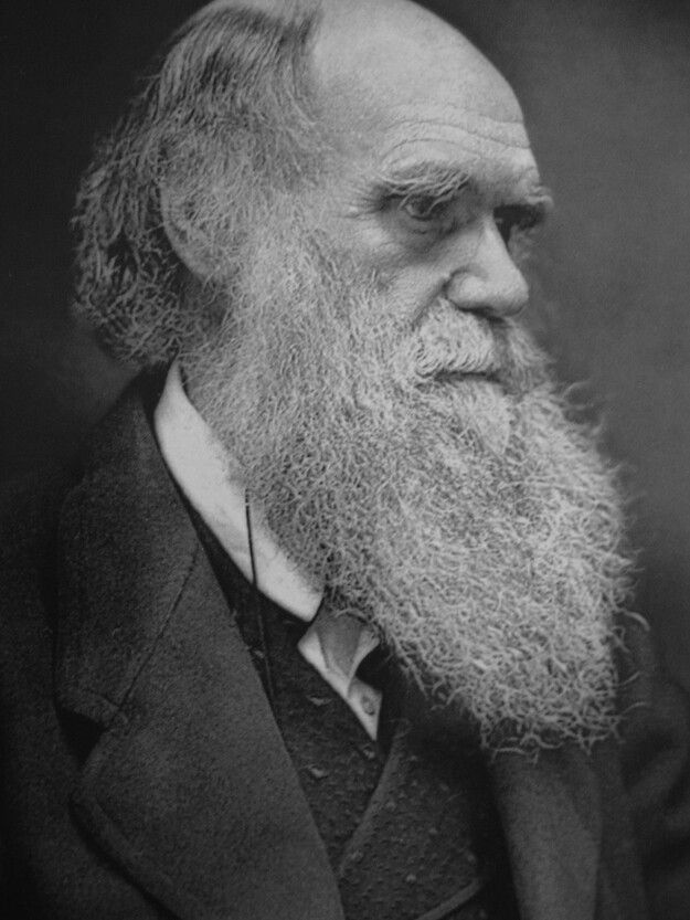 How can it be argued that Darwin's theory of natural selection is based on Romanticism?