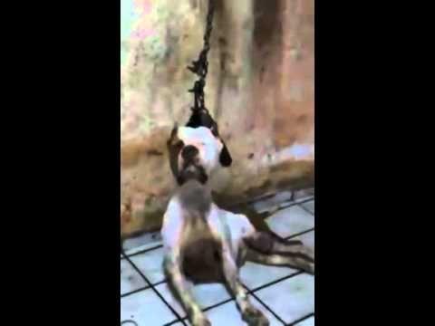 Justice pour ce chien pendu par son collier stop aux massacres animaliers