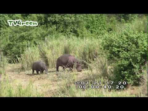 Wild Peers: South Africa (LibraryLook) - YouTube