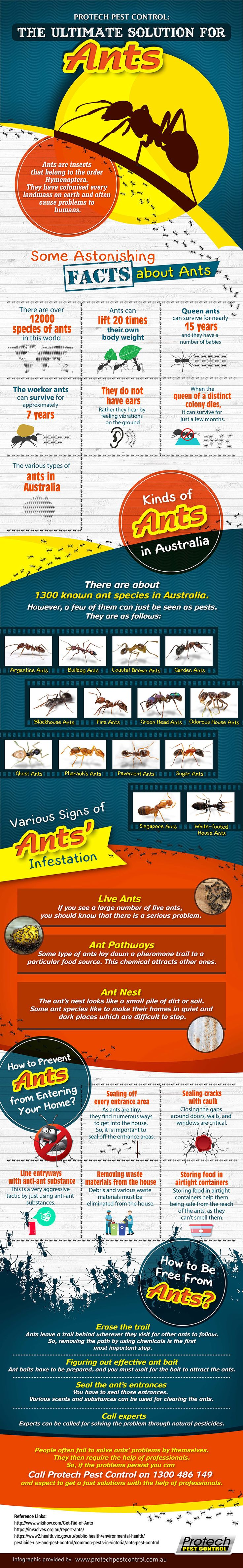 Do you want learn about ants? Check out our Infographic and discover the different types of ants, facts and useful tips to prevent them.