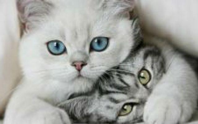 Diritti degli animali e manifesto del gattismo consapevole #gatti #animali #randagi #diritti