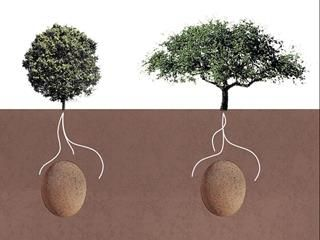 Get Buried in an Egg and Turn Into a Tree.  I wanna donate my organs & parts,  then get cremated,  and then stuffed in an egg.