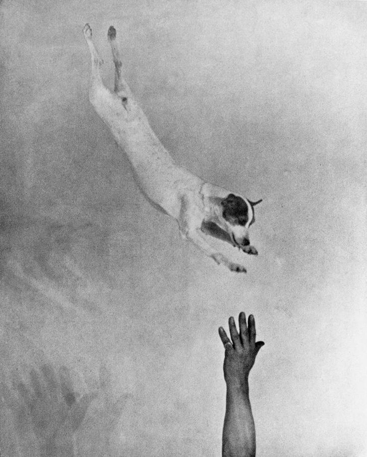 Martin Munkácsi Jumping fox terrier, circa 1930 Courtesy The Estate of Joan Munkácsi