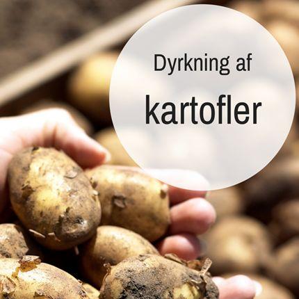 Dyrkning af kartofler - Gode råd og vejledning hos Plantorama