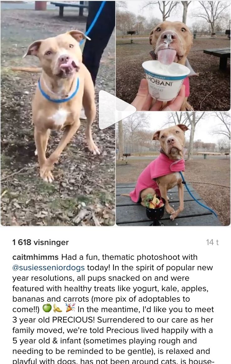 SAFE..12/31/16 WONDERFUL PRINCESS A1100414 PRECIOUS IS ALSO AT NYC ACC!! GET HER OUT PLEASE!! THEY MURDER FOR MONEY AND SPACE YOU KNOW!! /ij https://www.instagram.com/p/BOsi2luhl8t/?hl=nb
