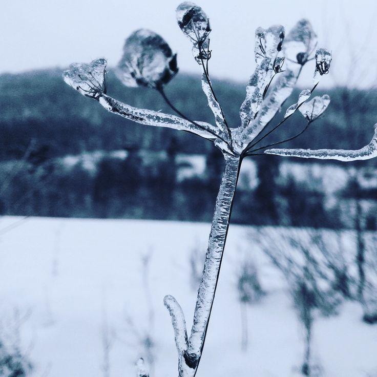 #nature #natura #mountains #góry #gory #macro #macros #macrophotography #winter #snow ##śnieg #zima #snieg #makro