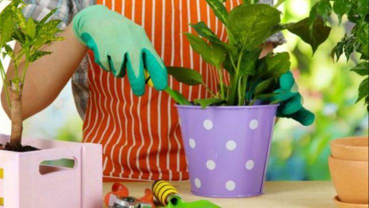 10 ingrasaminte naturale pentru florile de apartament - dr. Andrei Laslău