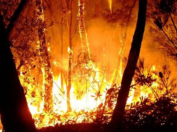 Worldwide bushfire