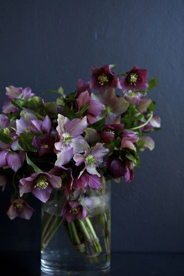 a hellebore bouquet... how decadent