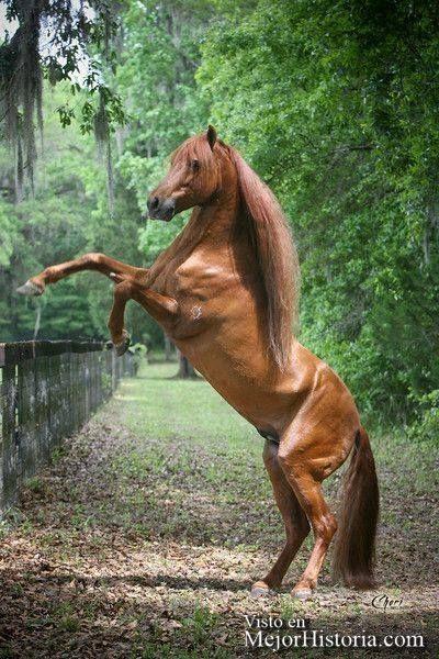 Los caballos me encantan, son animales que muestran una gran fuerza. Tienen un porte precioso al andar, y su mirada es una maravilla, se pueden ver su...
