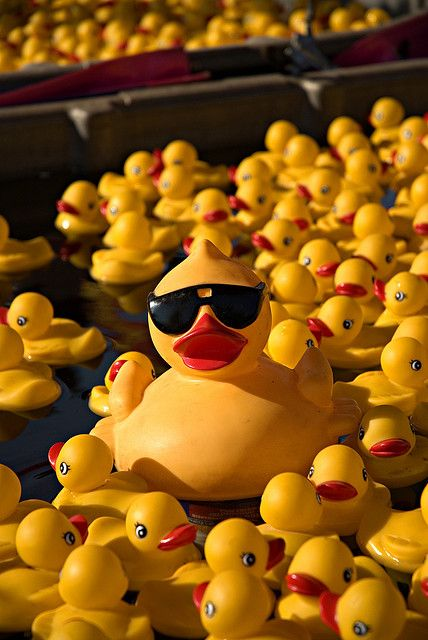 """Andy & the kids were at the store when Bella shouted """"mom look at the daddy ducky! He must have been playing poker last night cuz he's wearing shades like our daddy!"""" #SwarekFamilyThings"""