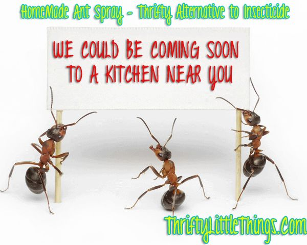 HOMEMADE ANT SPRAY : THRIFTY ALTERNATIVE TO INSECTICIDE - REALLY WORKS !