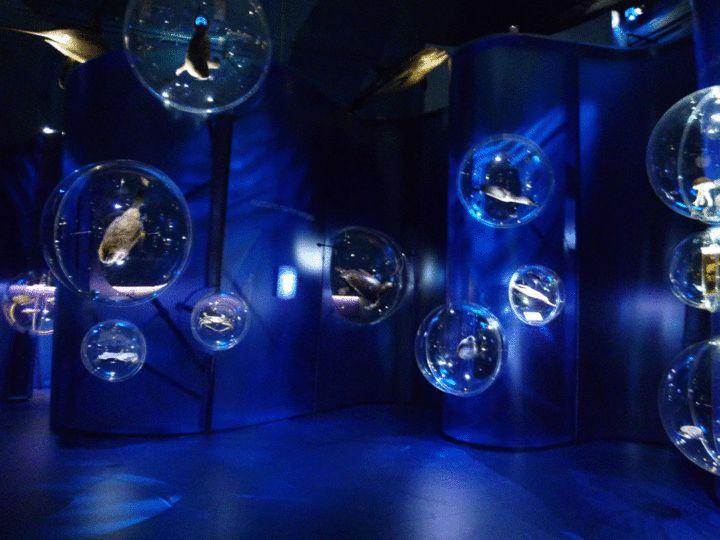 Museo di storia naturale di Venezia (2)