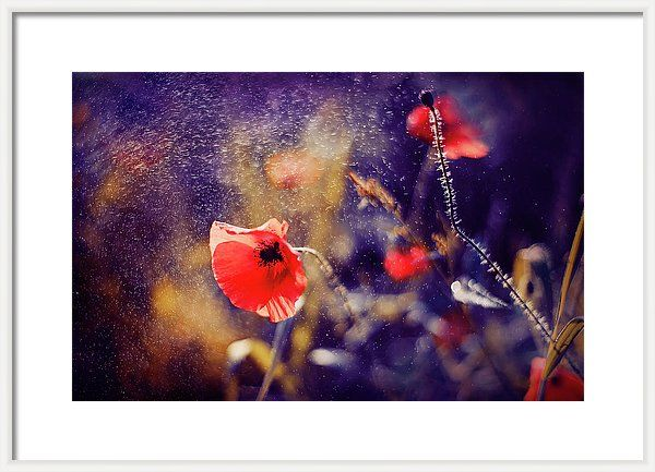 Framed Print featuring the photograph Red Poppy On Violet by Oksana Ariskina. A red poppy flower in a sparkling bokeh violet sunny abstract background. Available as mugs, posters, greeting cards, phone cases, throw pillows, framed fine art prints, metal, acrylic or canvas prints, shower curtains, duvet covers with my fine art photography online: www.oksana-ariskina.pixels.com #OksanaAriskina
