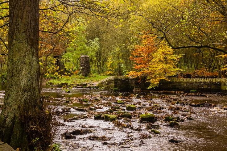 Autumn in Rivelin Valley Park.