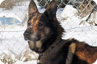 Sterling, VA - German Shepherd Dog Mix. Meet Sam 4135, a dog for adoption. http://www.adoptapet.com/pet/17488168-sterling-virginia-german-shepherd-dog-mix