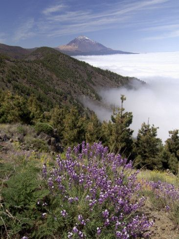 Mount Teide (Pico De Teide), Tenerife, Canary Islands, Spain Photographic Print by Sergio Pitamitz at AllPosters.com