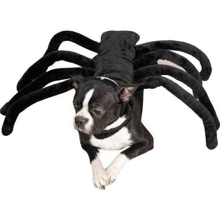 spider costume for small dog - Google Search