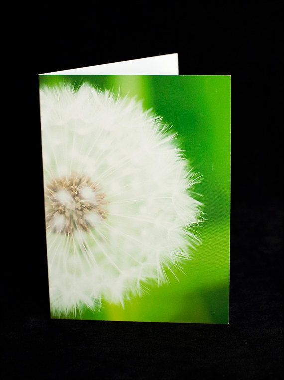 Greeting Card  white dandelion puff  blank inside by ErinnaImagery, $4.50