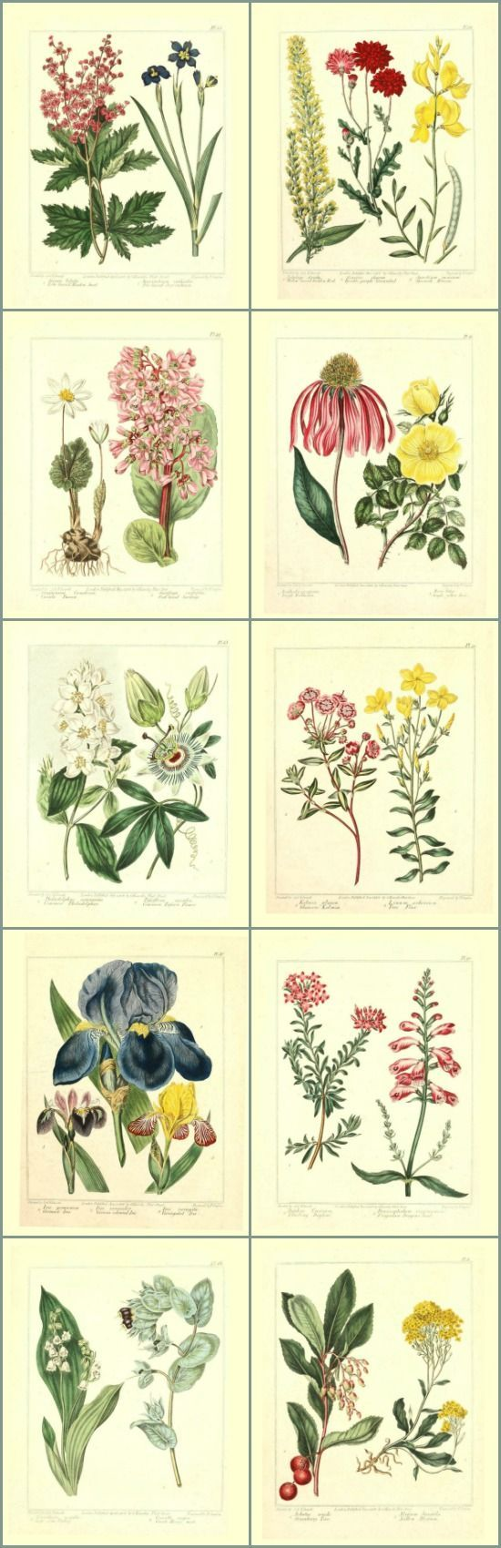 Library of Free Printable Botanicals   Stretch your decorating budget by using this library of free printable botanicals to make your own DIY wall art!