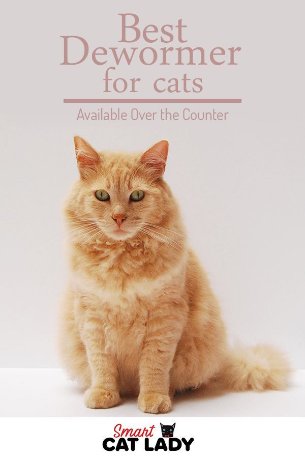 Best Dewormer For Cats Available Over The Counter Cat Care Cat Training Cat Dewormer