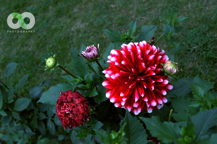 From bloosom till Death - null
